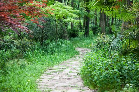 The footpath winding its way through a tranquil garden. photo
