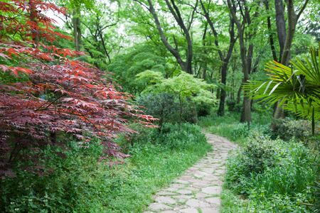 The footpath winding its way through a tranquil garden. focus at the leaf of maple tree on the left side photo