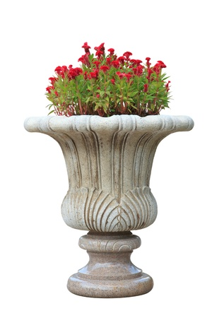 Ornamental  stone flowerpot isolated on white background.The flower on vase is called Chi kuan in China. photo