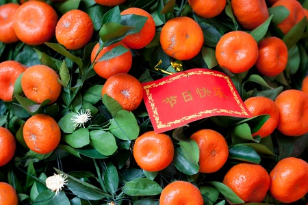 Close up shot of red greeting card on tangerines tree for the Chinese New Year. Character on Packet  symbolize happy new year and the tangerines representative good lucky in Chinese new year. photo
