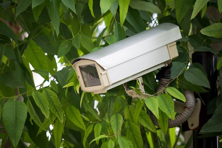Surveillance camera hided  on tree to oversee somewhere