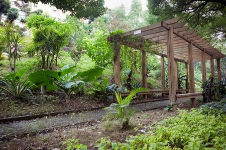 gazebo: Wooden Pergola with footpath through in park