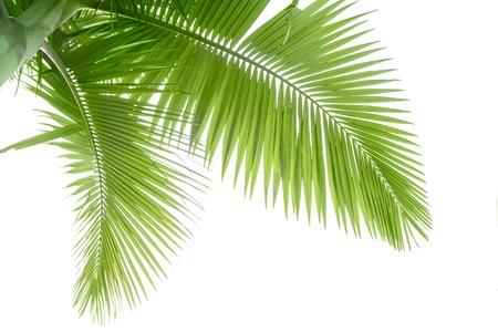 Een deel van Palmboom Stockfoto
