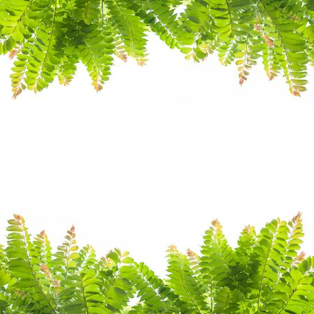 Green leaves on white background   photo