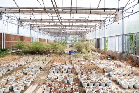 Old abandoned Greenhouse with dry potted plant photo