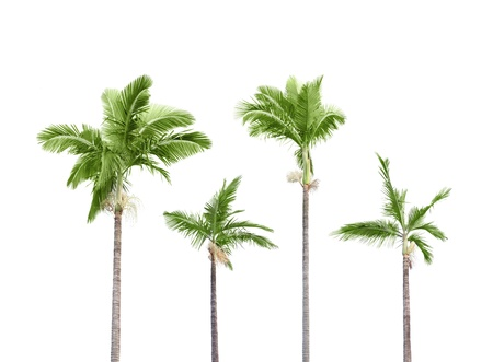 Plam trees isolated on white background