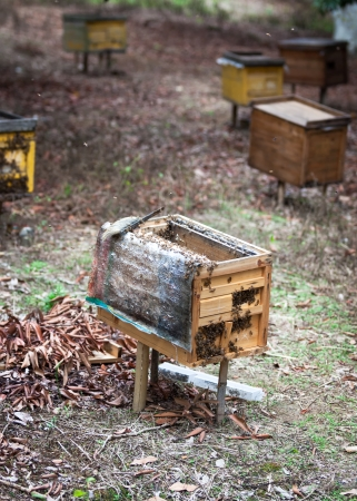 Rural wooden beehives on meadow  photo