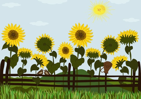 Fence and sunflowers Stock Vector - 15775311
