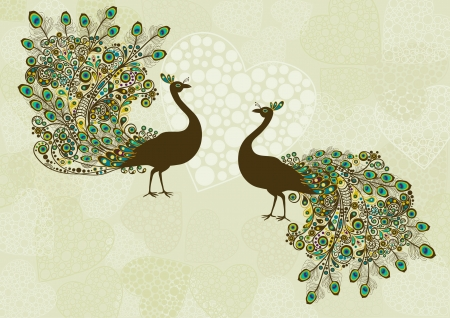 pluma de pavo real: Pavo real Vectores