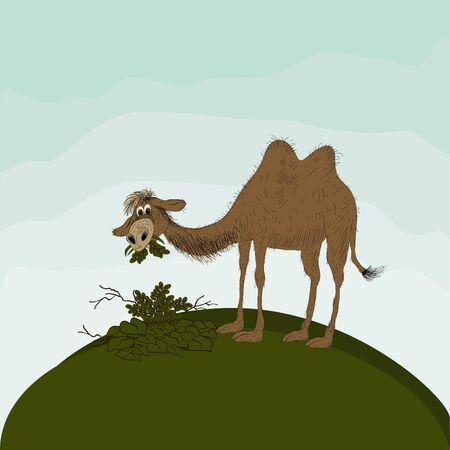 cartoon camel: Cartoon camel Illustration