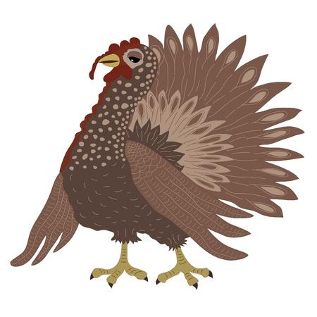 Turkey cock Stock Vector - 17991936