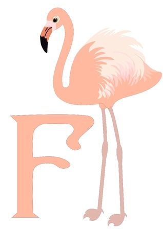 F for Flamingo Vector