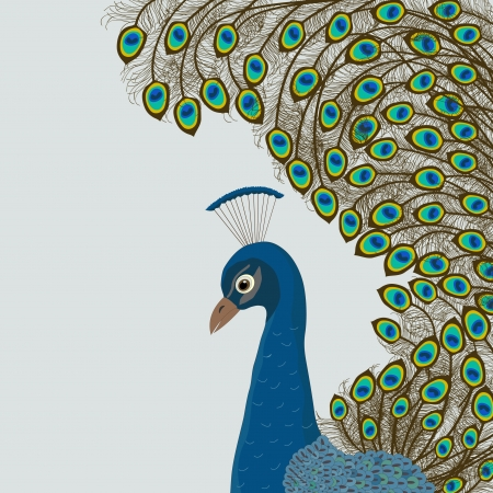 east indian: Peacock