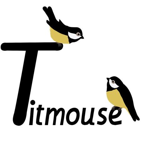 titmouse: Titmouse Illustration