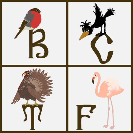 Set of birds on white background Vector