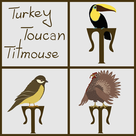 Set of birds  turkey, toucan, titmouse Vector