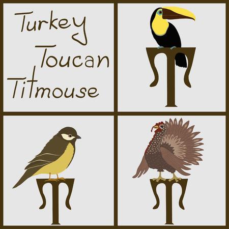 titmouse: Set of birds  turkey, toucan, titmouse Illustration