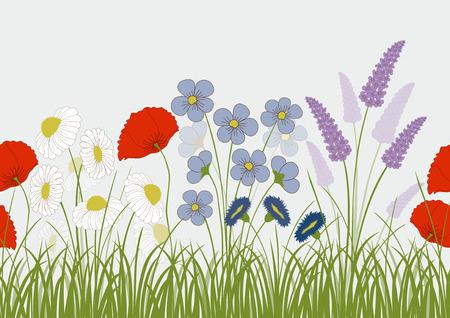 Naadloze patroon met wilde bloemen