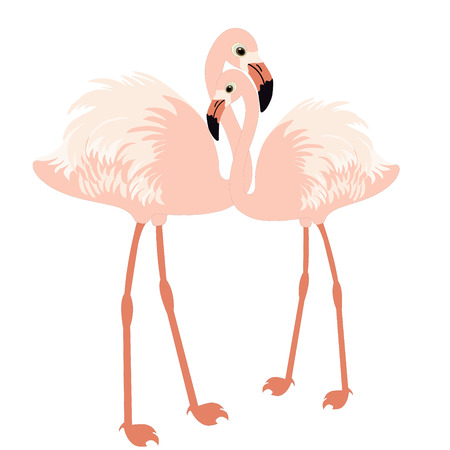 Pair of flamingo on white background Vector