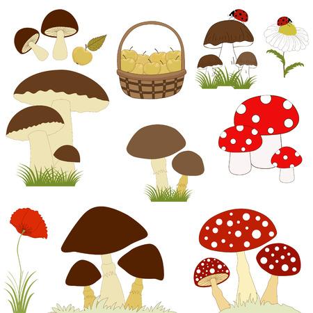 flower basket: Set of cartoon mushrooms on white background Illustration