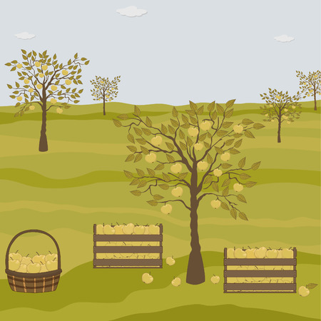 orchard fruit: Orchard with apple trees Illustration