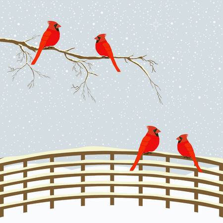 snow cardinal: Red birds on branch and fence in winter