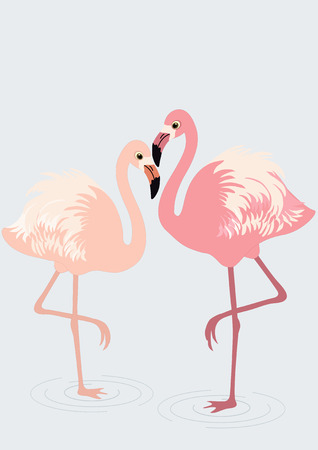 pink flamingo: Pair of flamingos on blue background