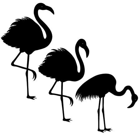 flamingi: Black sylwetka trzy flamingów na białym tle