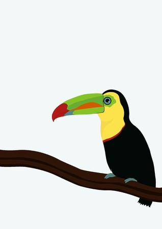toucan: Toucan on a branch Illustration