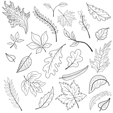 black and white image: Set of leaves. Black and white image Illustration