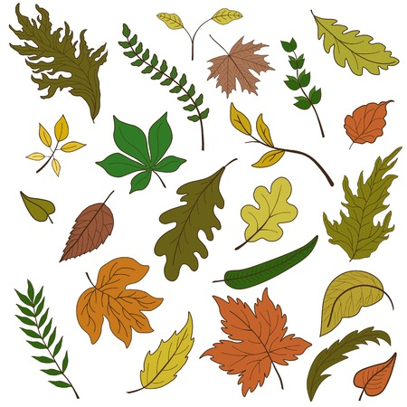 ferruginous: Vector set of colorful leaves