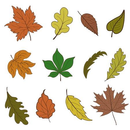 plants species: Vector set di foglie di autunno Vettoriali