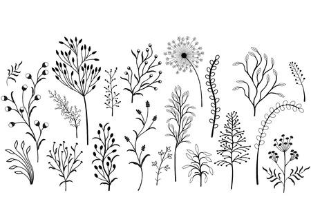 Conjunto de plantas silvestres, ilustración en blanco y negro.