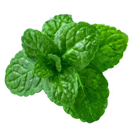Green mint isoleted on white background
