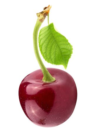 Isolated cherries. One cherry with leaf isolated on white background with clipping path as package design element.