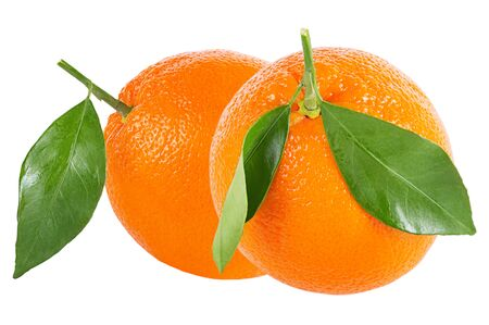 Isolated citrius fruits. Two whole oranges with leaf isolated on white background   as package design element.