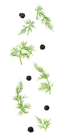 Isolated flying spices. Falling fresh dill herb and black pepper grains on white background as package design element and advertising. Archivio Fotografico - 127506358
