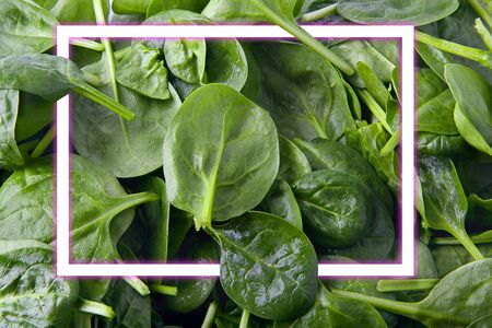 spinach green leaves background, with neon light square for copy space. Food minimal concept. flat lay. Archivio Fotografico - 127507147