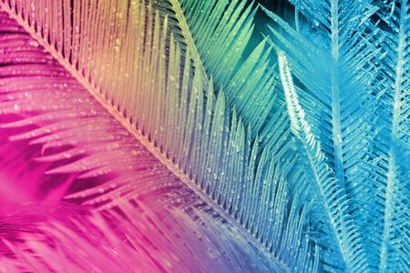 close up of exotic tropical leaves colored in neon light Archivio Fotografico - 129244439