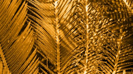 Close-up of palm leaves in the field painted in golden colour in minimal style. Copy space, vacation concept. Archivio Fotografico - 129247125