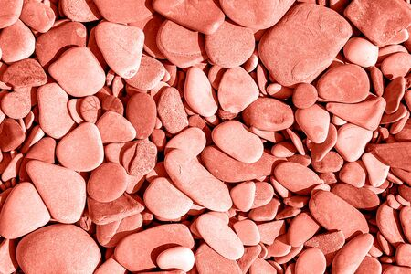 close-up of pile colorful pebbles from tropical sea beach, in trendy coral color.Minimal summer fruits pattern for blog or recipe book on green background. Stock Photo