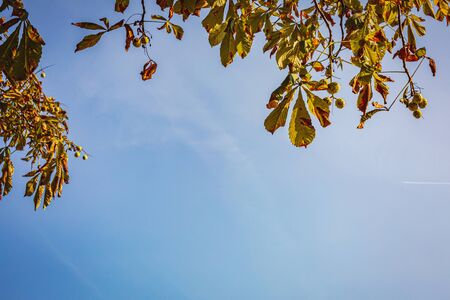 Autumn background with sky and leaves in minimal style., close-up. Copy space, fall vacation concept.