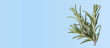 Food background with fresh raw rosemary, top view Banco de Imagens