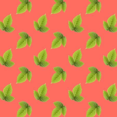 Seamless pattern of many whole raspberry leaves. Collage art. Vegetarian and healthy eating concept. Tropical abstract background.