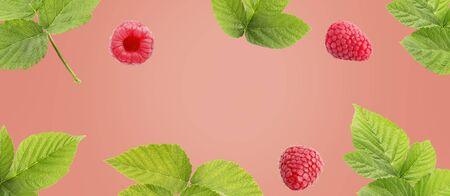 Berry fruit banners on soft coral background . Design for natural cosmetics, sweets and pastries filled with fruit, dessert menu, health care products. With place for text