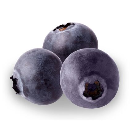 Three Blueberries   on white background for package design element and advertising. full depth of field.