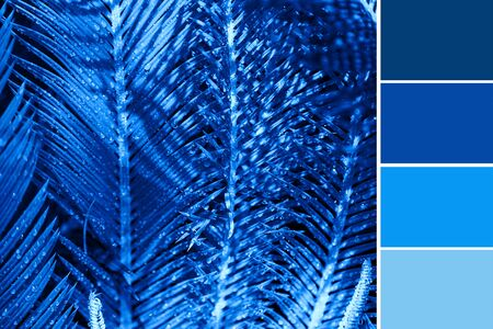 Palm leaves texture toned in classic blue color and palette of colors Banco de Imagens