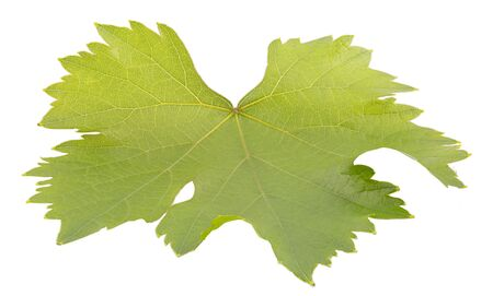 Leaf of grapes with clipping path isolated on white Zdjęcie Seryjne - 140234429