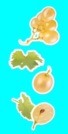 Floating white wine grapes isolated on cyan background Zdjęcie Seryjne - 140234447