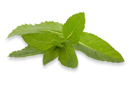 Isolated fresh herb. Fresh mint leaves on white background with clipping path as package design element and advertising. Full depth of field. Zdjęcie Seryjne